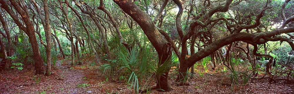 528 coastal hardwood hammock by steve vaughn steve vaughn giclee art   florida collection   rh   biz2bizonline